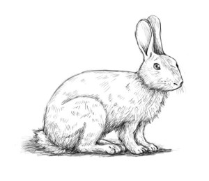 how-to-draw-a-rabbit11